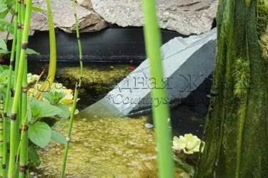 Нитчатые водоросли кладофора в садовом пруду. Борьба с нитчаткой