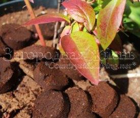 Спитой кофе (кофейная гуща) - домашнее удобрение для растений