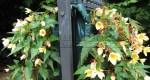 Вертикальная клумба своими руками. Бегония на фитостене в саду