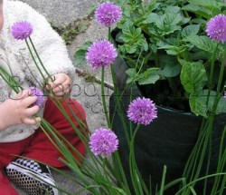 Дети в саду и на даче. Развивающие занятия с детьми на природе