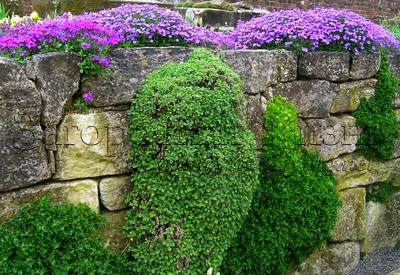 Рокарий своими руками. Растения для рокария