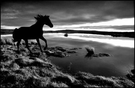 The Drowned Horse