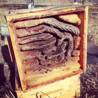 3.12 empty hive