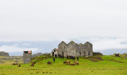 Home of Icelandic horses | Gay Couple Road Trip East Iceland © Coupleofmen.com