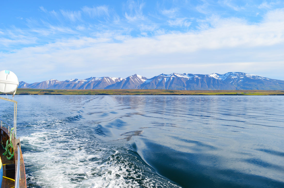 Humpback Whale Watching Tour in Dalvík, North Iceland © CoupleofMen.com