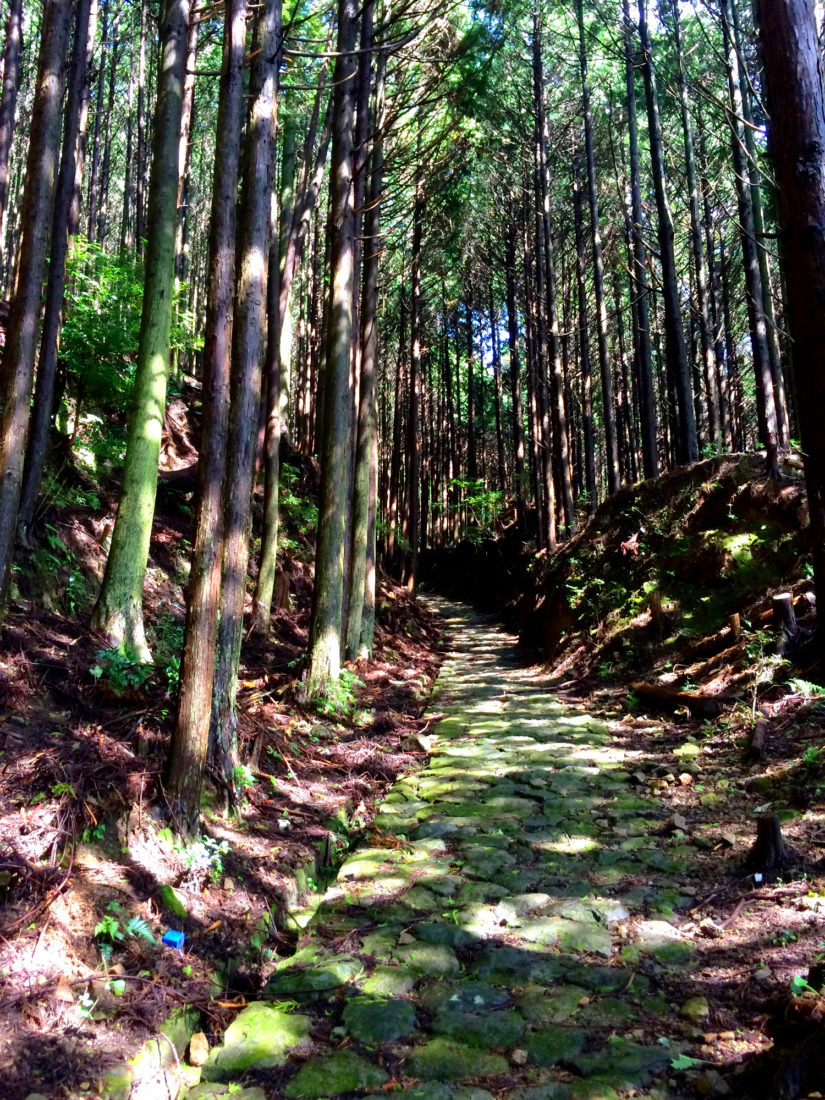 Ancient trails and stairways through dense forest © CoupleofMen.com