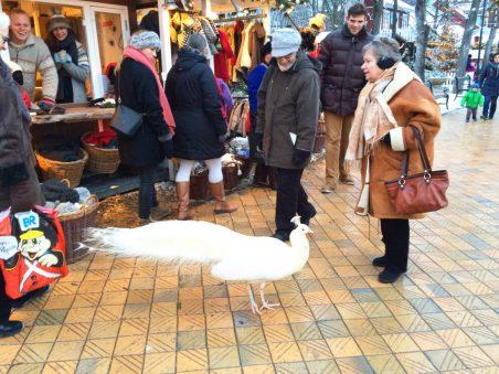 Peakcock meets Christmas Market   Gay Travel Guide Tivoli Gardens Copenhagen Winter © Coupleofmen.com