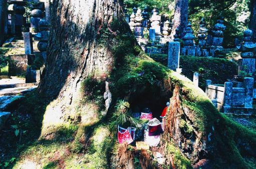 Huge old trees at Okunoin Cemetery in Koyasan © CoupleofMen.com