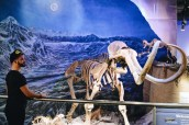 Skeleton of a mammoth   Royal Tyrrell Museum Palaeontology Drumheller Alberta Canada © CoupleofMen.com