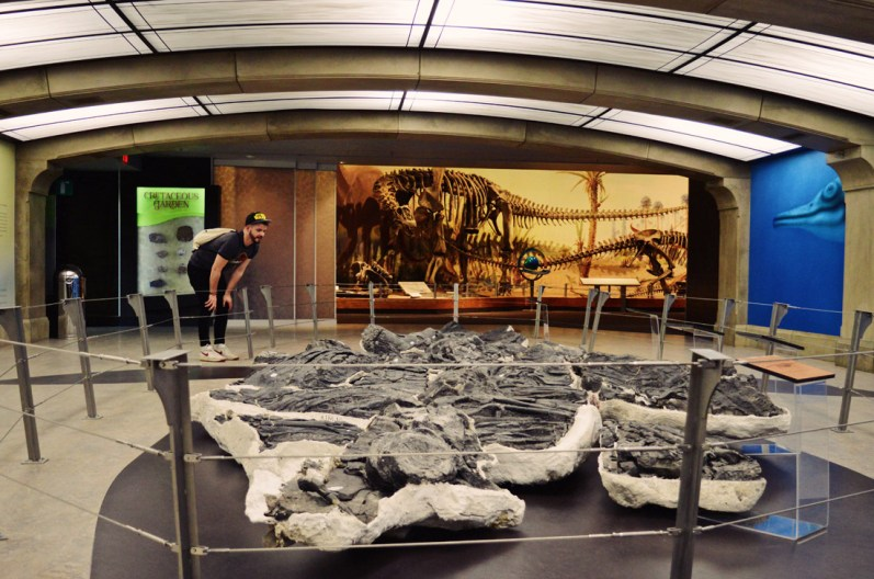 "The ""Triassic Giant"", a 160 m2 specimen of the world's largest known marine reptile 