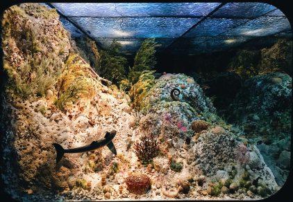 Underwater world | Royal Tyrrell Museum Palaeontology Drumheller Alberta Canada © CoupleofMen.com