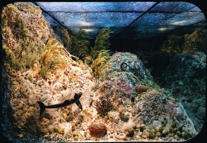 Underwater world   Royal Tyrrell Museum Palaeontology Drumheller Alberta Canada © CoupleofMen.com
