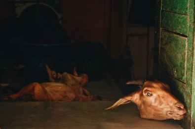 A Goats Head in Butchery in Kathmandu | Gay Travel Nepal Photo Story Himalayas © Coupleofmen.com