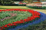 Blue, red, yellow, pink, white - Spring arrives in West Holland | Keukenhof Tulip Blossom Holland