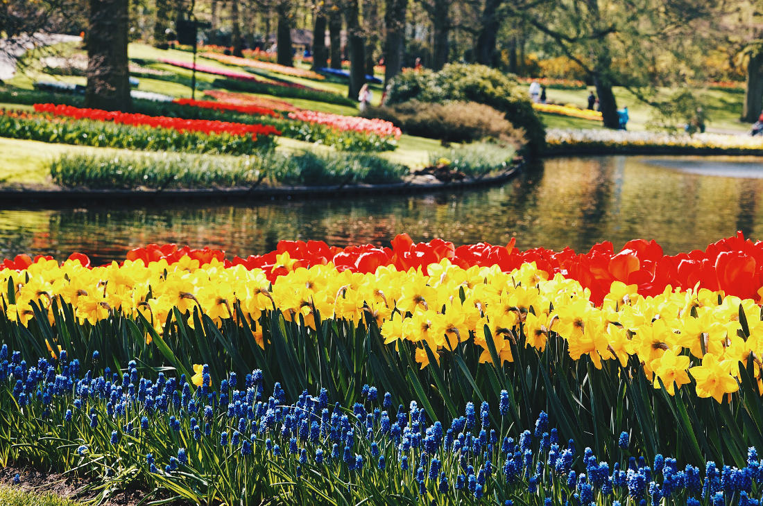 Colors, waters and sun - the best mix for a flower day outdoors   Keukenhof Tulip Blossom Holland