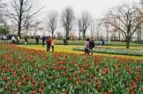 An ocean of flowers and colors | Keukenhof Tulip Blossom Holland © Coupleofmen.com