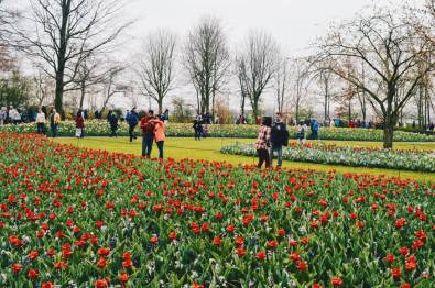 An ocean of flowers and colors | Keukenhof Tulip Blossom Holland © Coupleofmen.com