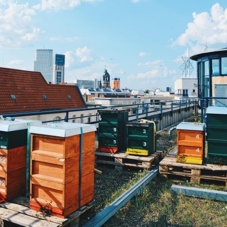 Rooftop is home for thousands of Honey Bees | Scandic Berlin Kurfürstendamm gay-friendly Hotel © Coupleofmen.com