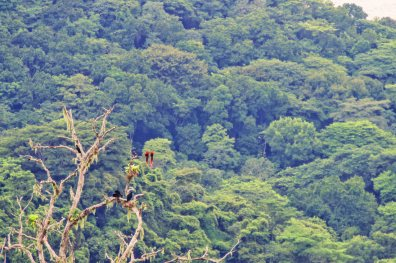 Toucans and a couple of red Macaws chatting and singing | Gay-friendly Costa Rica © Coupleofmen.com