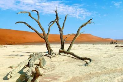 Dead black Acacia trees of Deadvlei © Coupleofmen.com