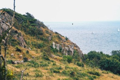Sheep, Seagulls and sailboats - Look at the beauty of Kullaberg Nature Reserve © Coupleofmen.com