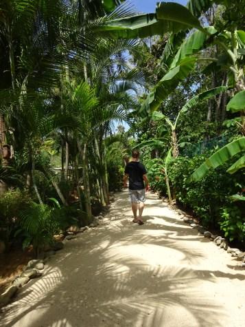 Jungle pathway