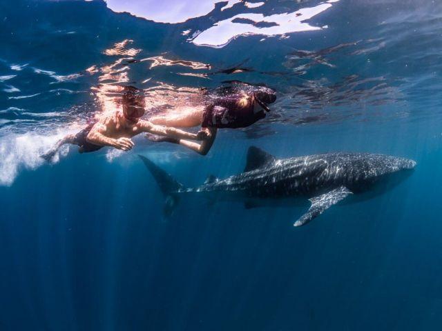 Michael et Alex nagent avec un requin baleine exmouth australie ningaloo reef