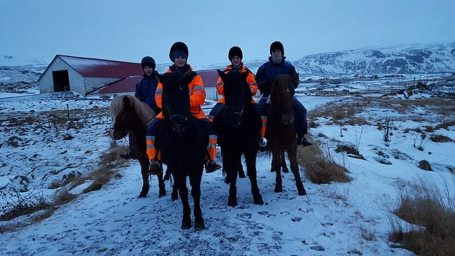 A photo of riders on the Icelandic Horse in winter