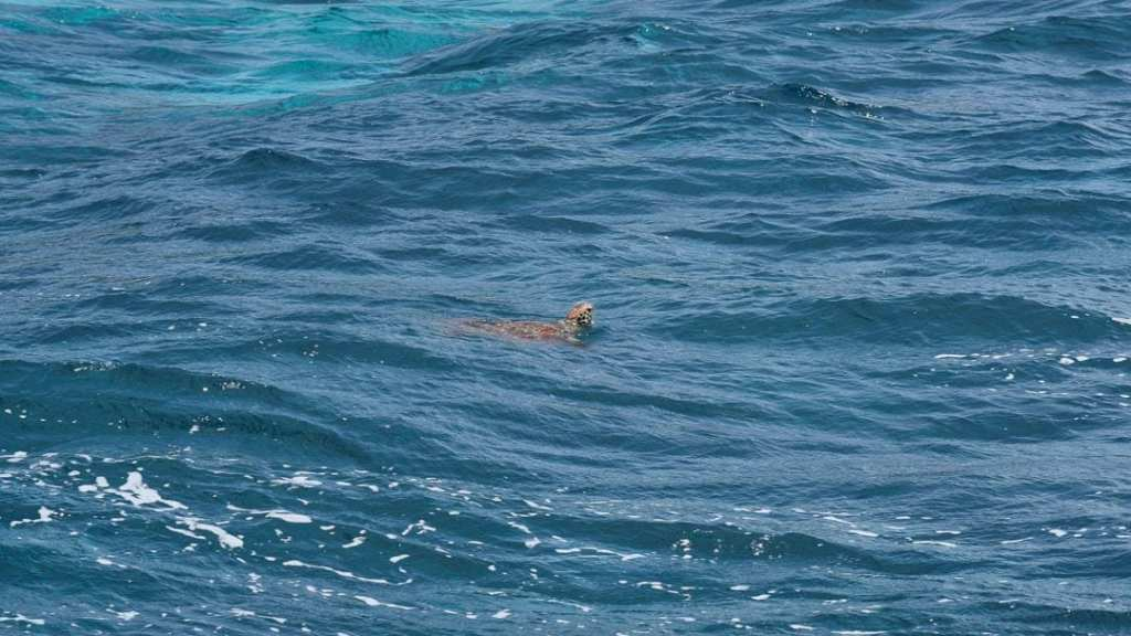 Apo+Island+Marine+Life