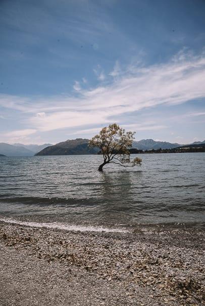 One-tree-lake, one-tree-lake-wanaka, lake-wanaka-travel-guide, lake-wanaka-south-island-roadtrip, lake-wanaka, lake-wanaka-sunset, new-zealand-south-island, south-island-nz, south-island-instagram, beautiful-places-new-zealand, franz-josef-wanaka, franz-josef-to-lake-wanaka, south-island-road-trip-destinations, things-to-see-south-island-new-zealand, 14-day-nz-itinerary