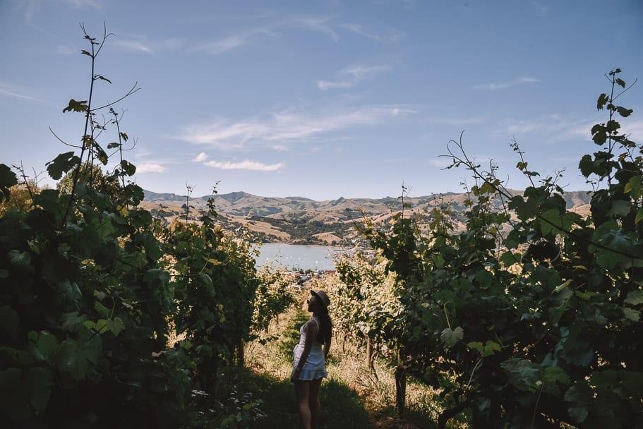Akaroa, Meniscus-Winery-Akaroa, Akaroa-Instagram, Things-to-do-Akaroa, Akaroa-Winery, Akaroa-New-Zealand, Akaroa-Christchurch, Christchurch-day-trip, south-island-road-trip-itinerary, 2-week-new-zealand-itinerary, 7-day-south-island-itinerary