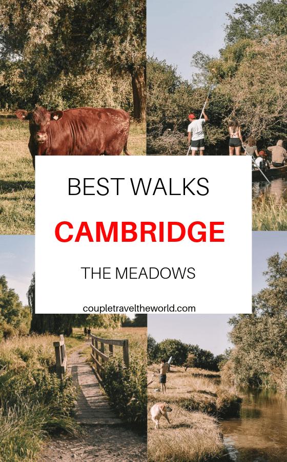 best-walks-cambridge-the-meadows