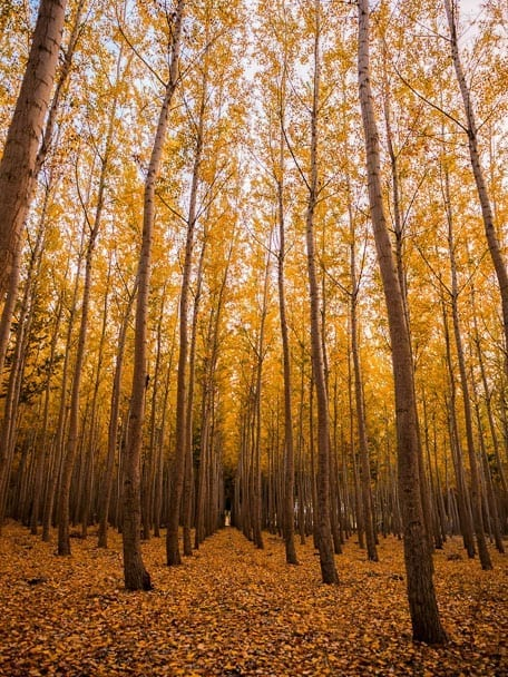fall-date-ideas-wiltshire