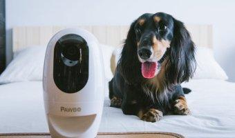 Pawbo Life Wi-Fi Pet Camera At 45% Off