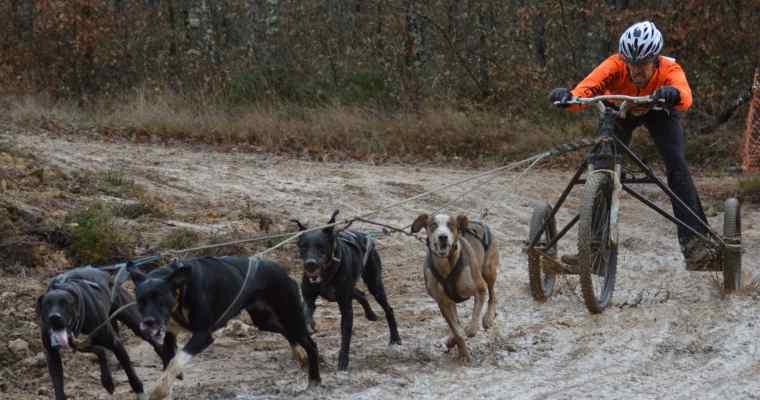 Courir avec son chien ?