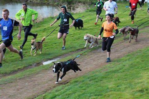 Courir avec son chien au Doggy