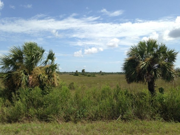 Turner River Scenic Drive - Big Cypress - Everglades - Floride