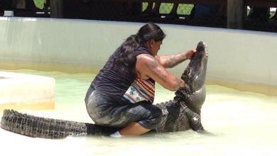 Photo of Everglades : l'indien Rocky Jim mordu par son alligator