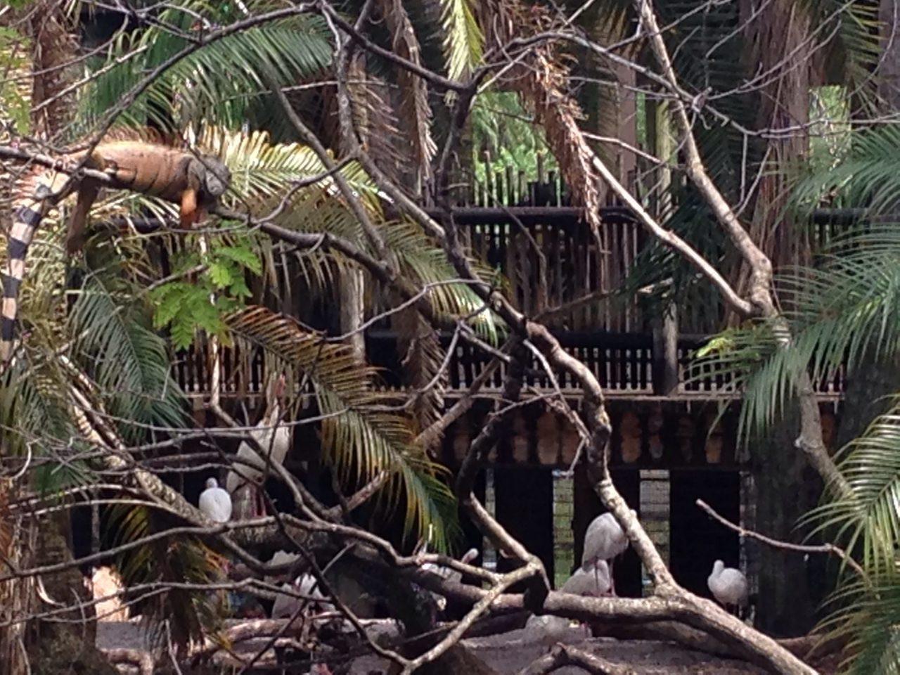 Palm Beach Zoo Floride