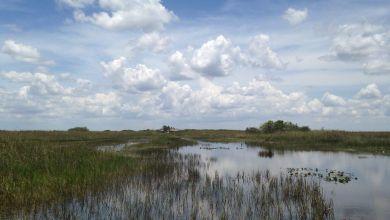 Photo of Les Everglades entre Miami et Naples (Tamiami Trail – US41) : indiens et alligators