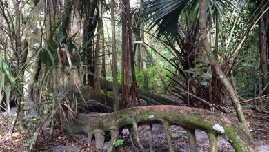 Photo of Secret Woods Nature Center – parc naturel à Dania Beach