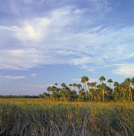 Les Everglades Naples Floride