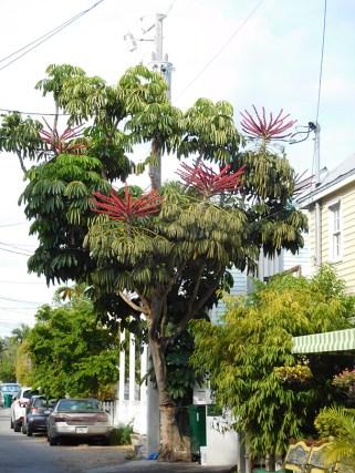 Flore à Key West - Floride