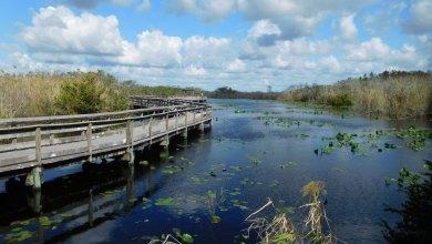 Photo of Visiter le Sud des Everglades (entre Florida City et Flamingo) : le Parc National des Everglades