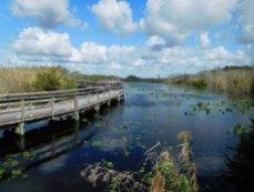 Anhinga Trail Royal Palm (Flamingo -Everglades national Park)