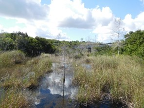 Pa-Hay-Okee (Flamingo -Everglades national Park)