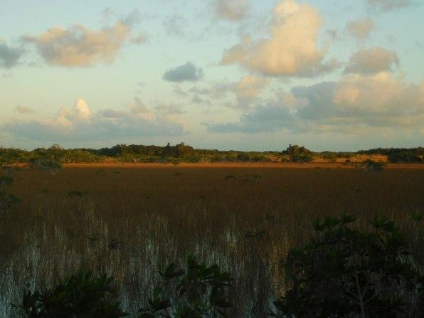 Près de Mahoganny Hammock - Flamingo - Everglades national Park)