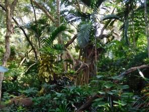 Pinecrest Tropical Garden - Miami - Floride