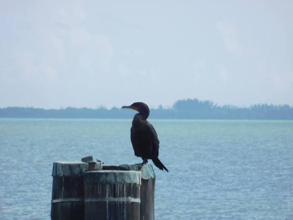 Oiseau dans la baie de Biscayne, Villa Vizcaya, Miami - Floride