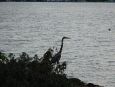 Oiseau à Haulover Beach - Miami Beach